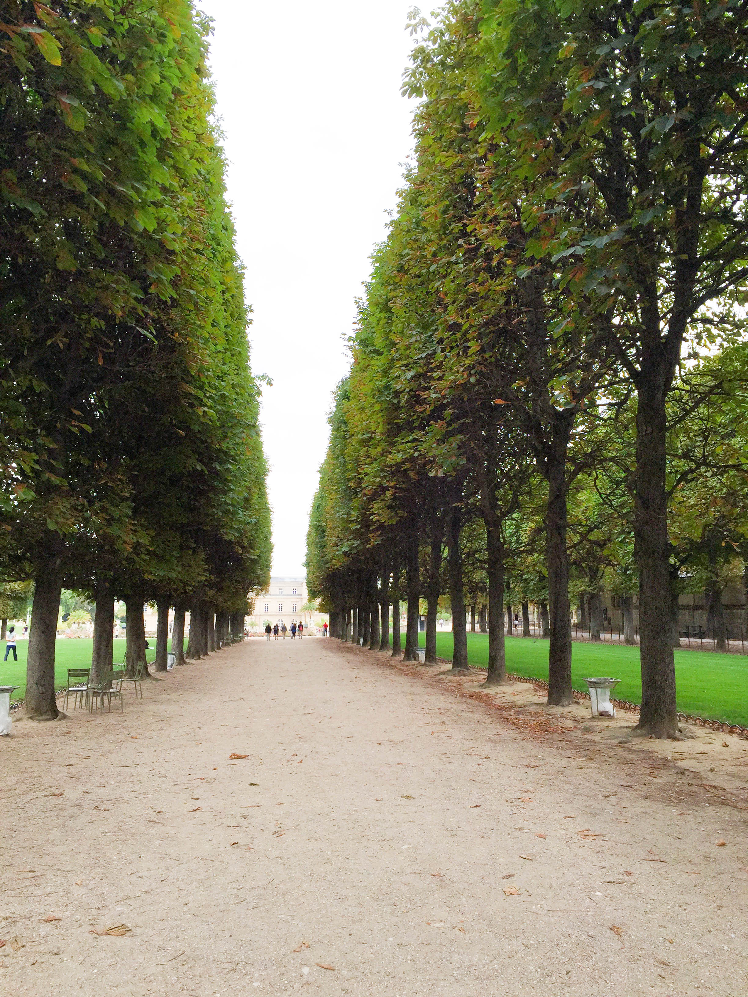 There were rows and rows of trees like this in the Luxembourg Gardens.