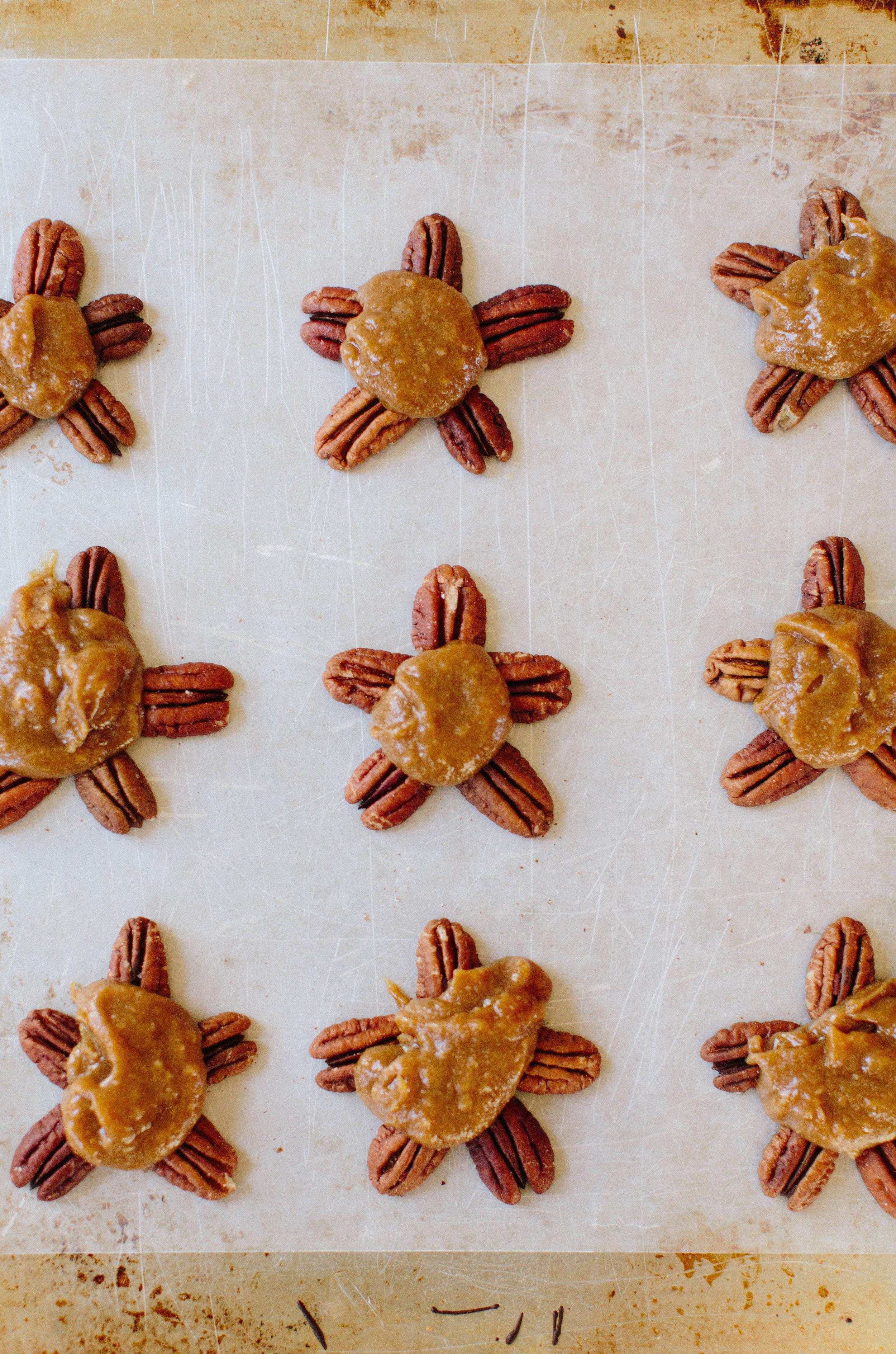jennahazelphotography-vegan-turtles-6659.jpg