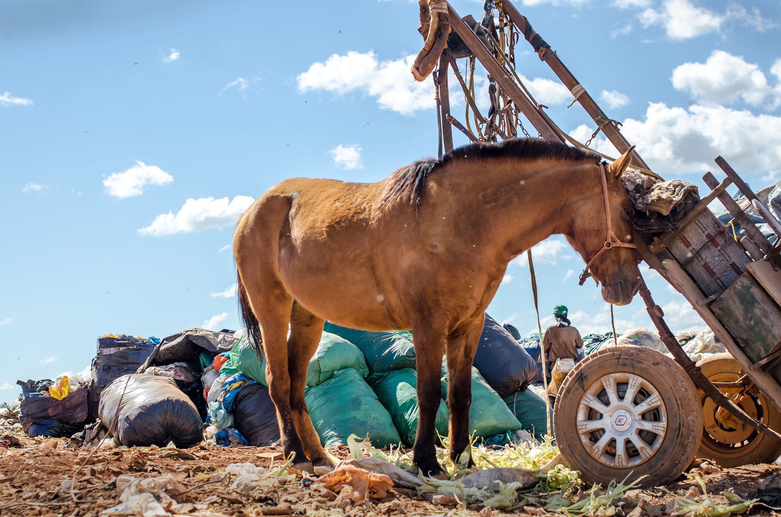 Horses and carts are sometimes used to transport trash. This one was so sweet, and enjoyingan afternoon rest.