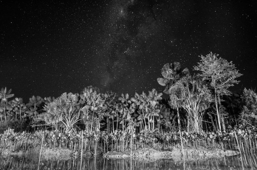 Starry jungle nights.