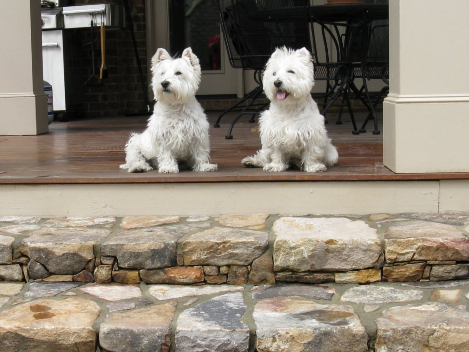 "These stone steps were built with 5"" risers to accommodate small dogs."