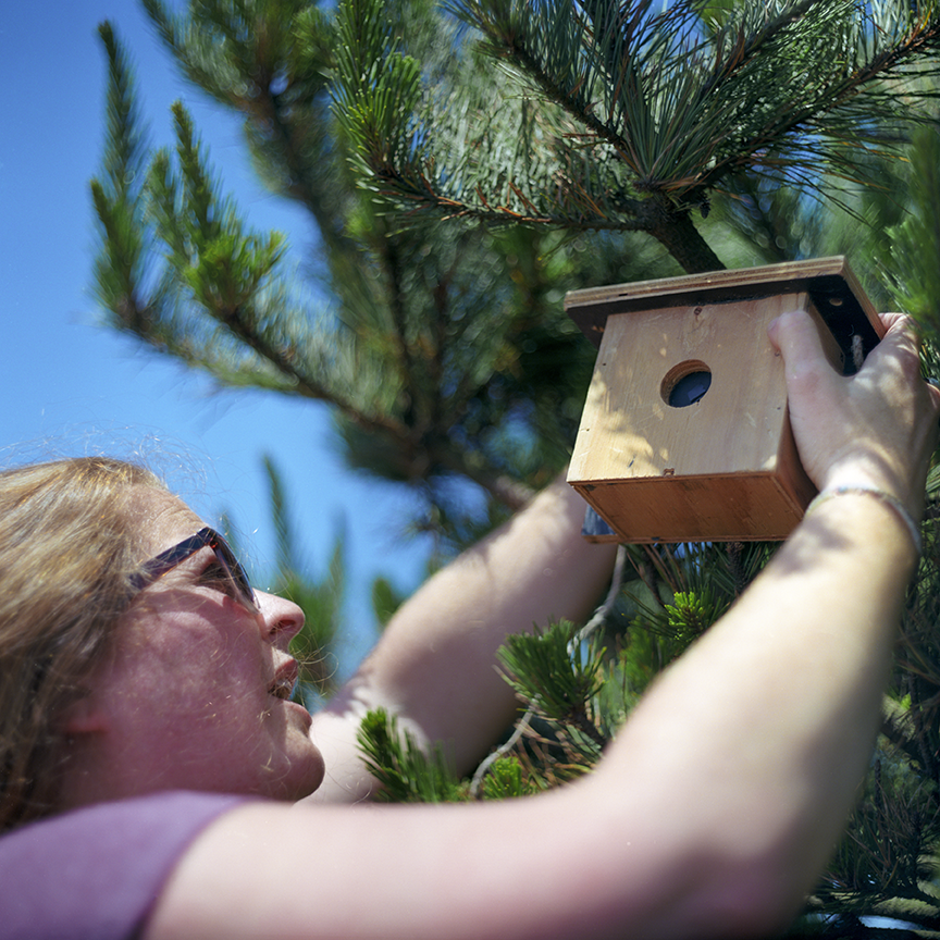 McDonald installs a pinhole camera shaped like a birdhouse on a tree in Pacifica.  Photo © Aimee Santos