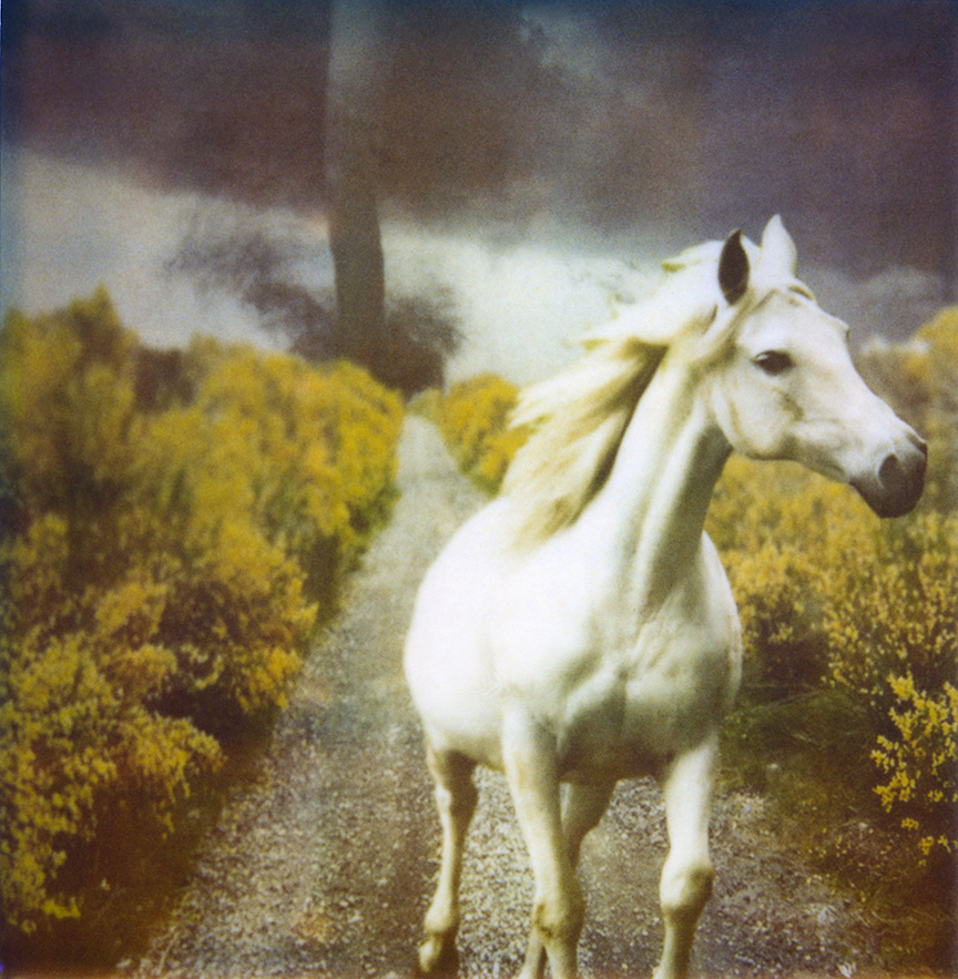 'White Horse with Twister' from Ephemeral Interventions Polaroid Photograph, 2012.  Photo © Moira McDonald