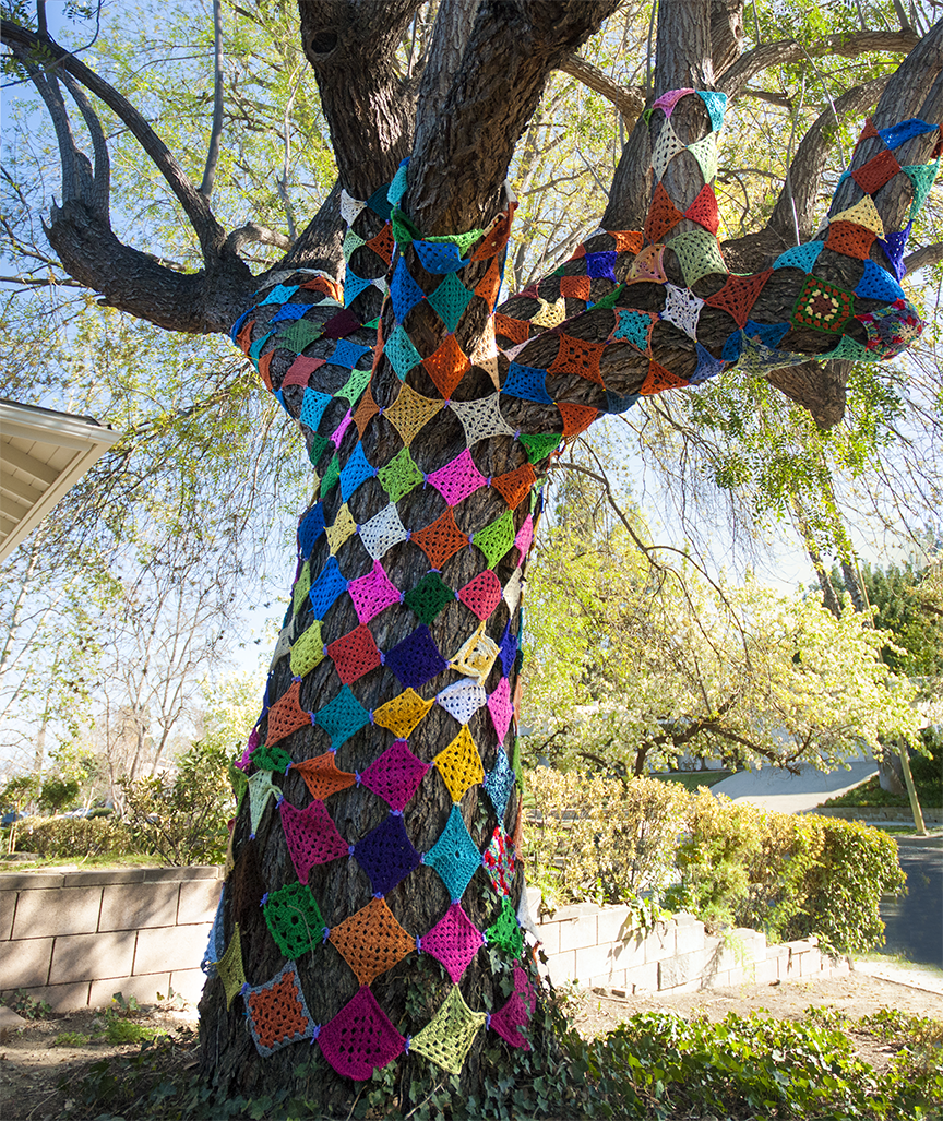 Kornblum had been eyeing the tree in her front yard for awhile and finally started covering it with her knitted creations. Photo © Aimee Santos