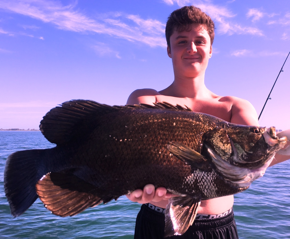 Hot Damn! Ate a fat shrimp right after we rode over him. Textbook Catch! Tripletail off Siesta Key