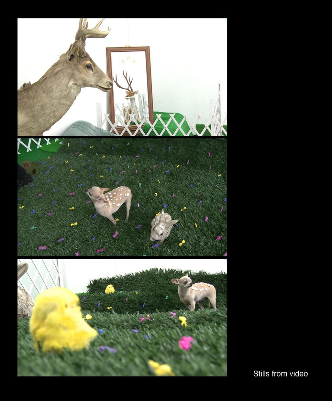 07 Jaye RHEE_Bambi_Video.jpg