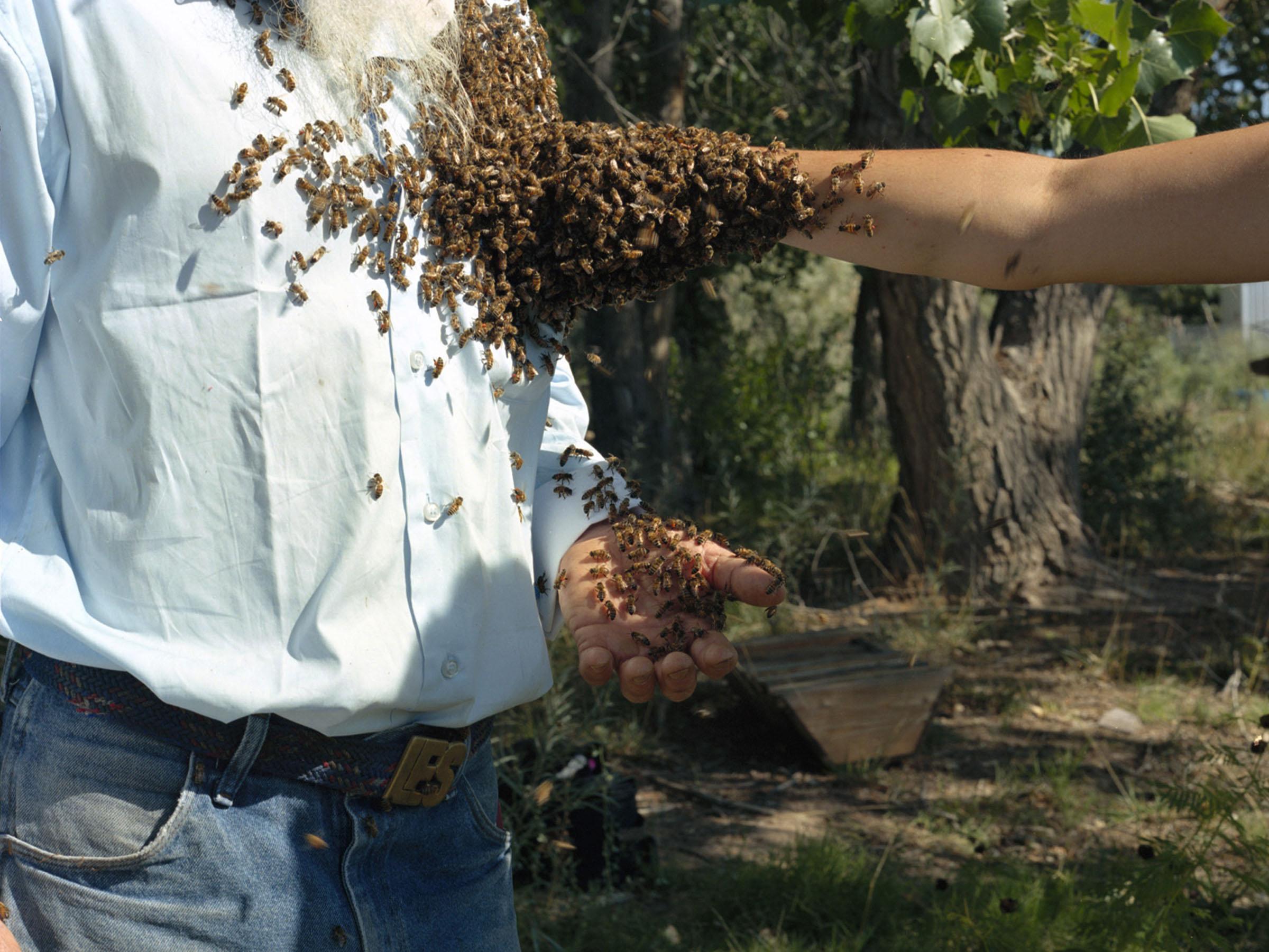 HollyLynton_Les, Amber, Honeybees, New Mexico.jpg