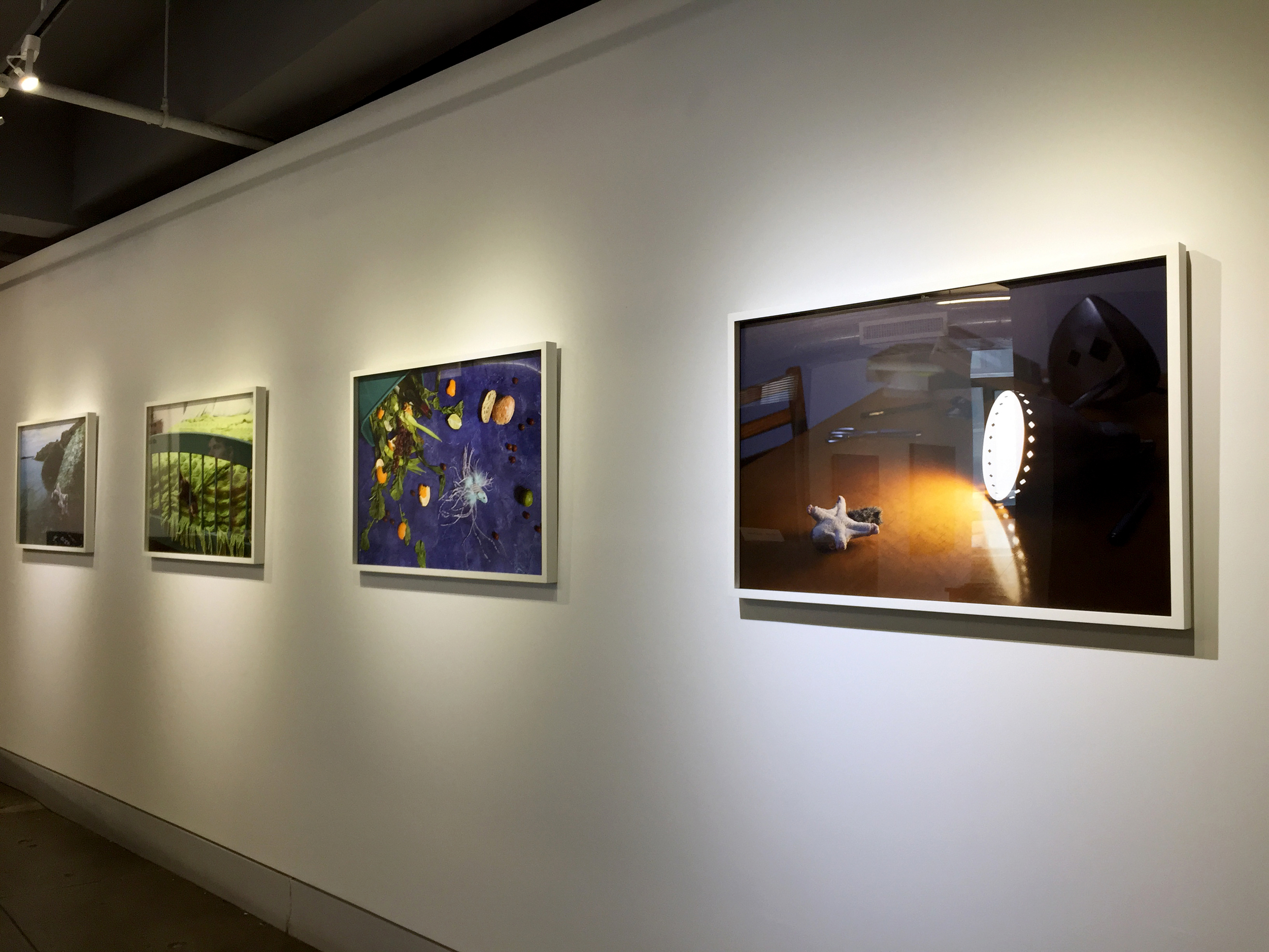 Jeanette May  Morbidity & Mortality series  Installation view