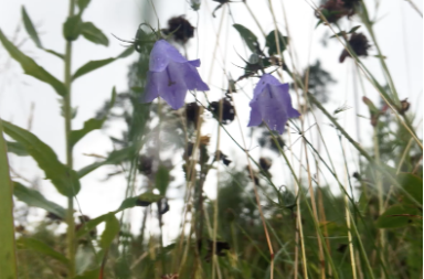 Moa Alskog,  Woe to anyone for whose sake the meadow sighs and the bumblebee weep!  (2018), 10:00 min.