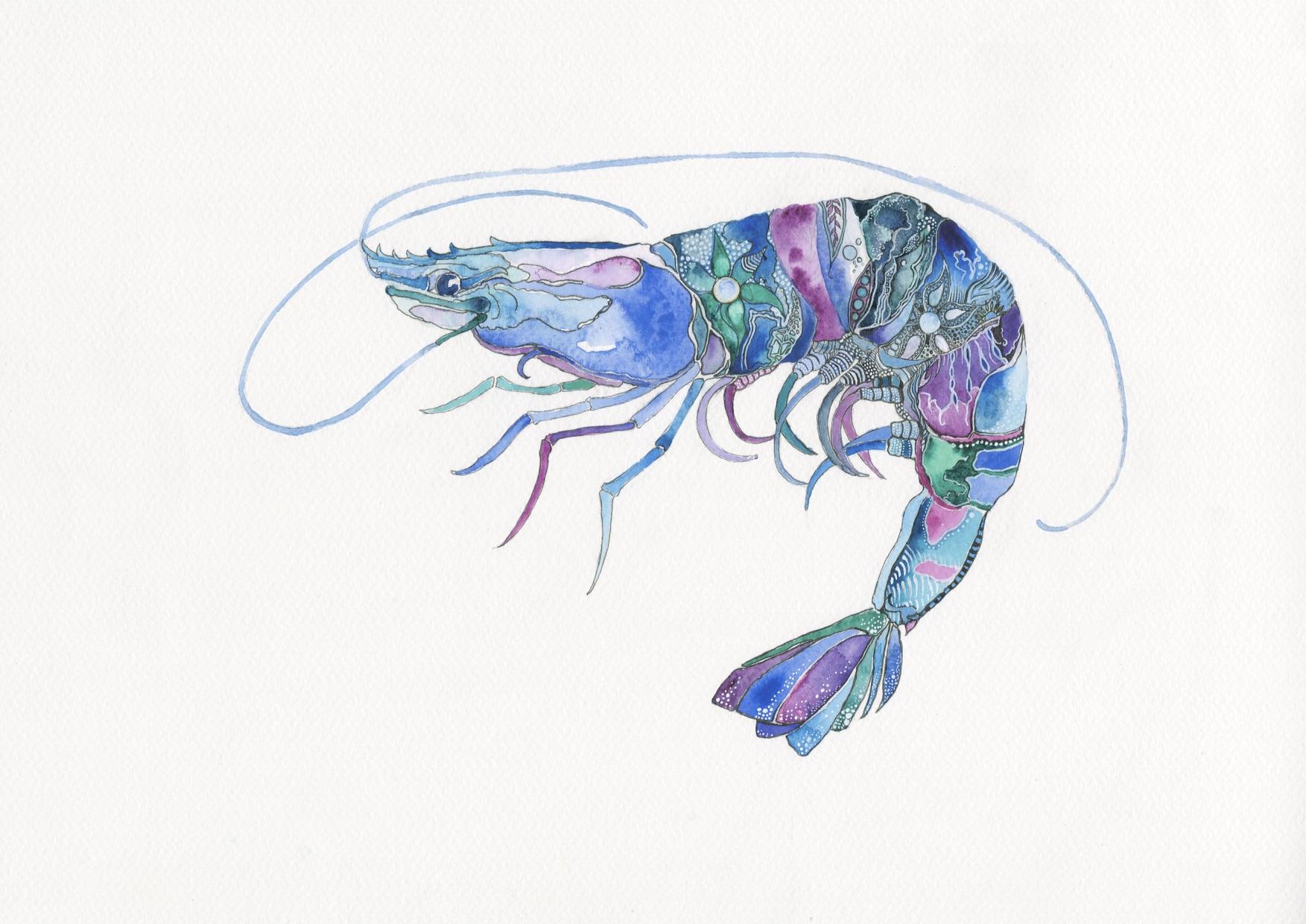 New Shrimp 2.jpg
