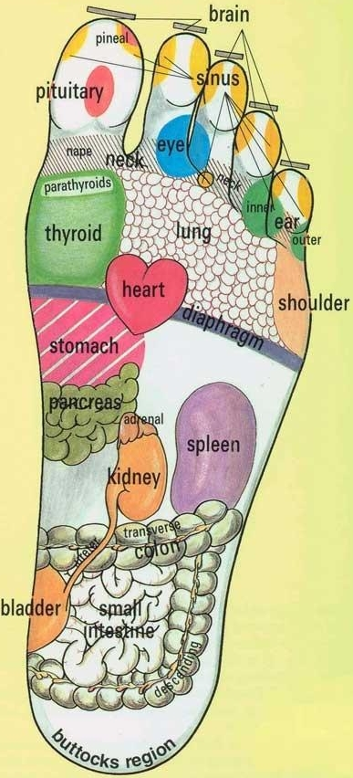 Reflexology zones explained