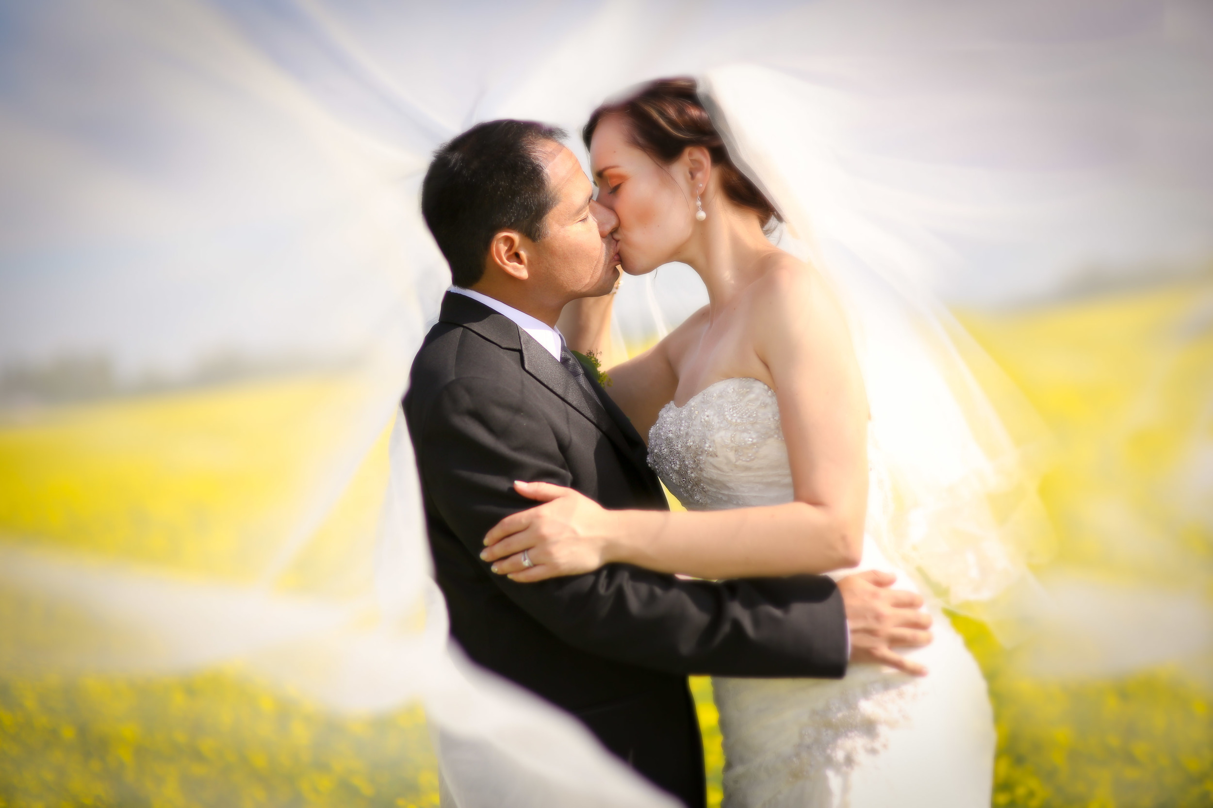 In the Canola Fields - Photography by Benamoz 2015 Wedding Contest.jpg