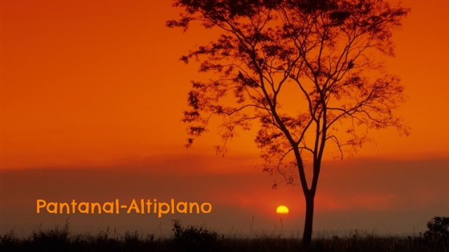 Pantanal-Altiplano