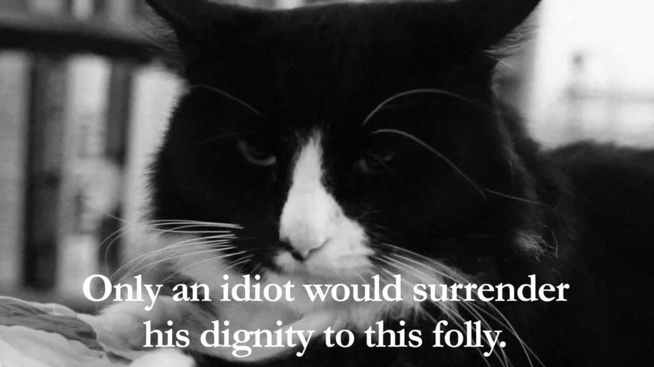 Cat videos go philosophical. The now famous Henri Le Chat Noir, existential hero. Click image for the first video I saw and loved.