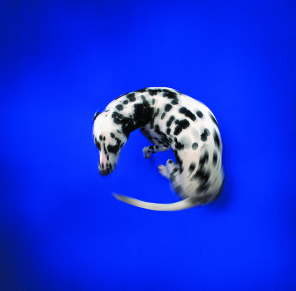 DogChasingTail.jpg