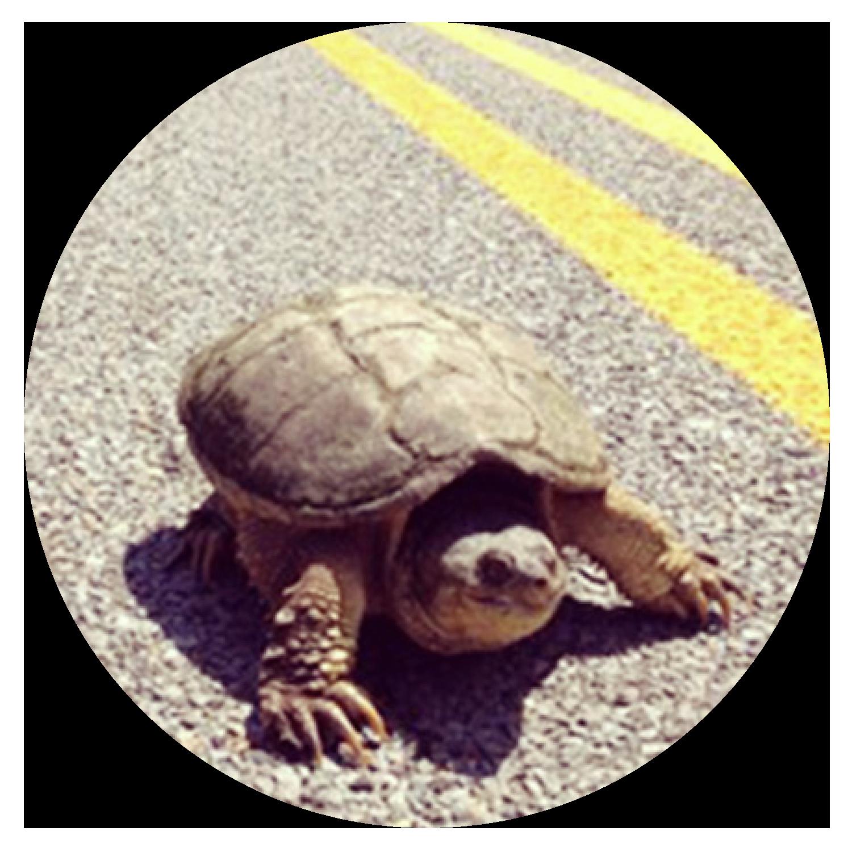 Mr. Turtle  Writer