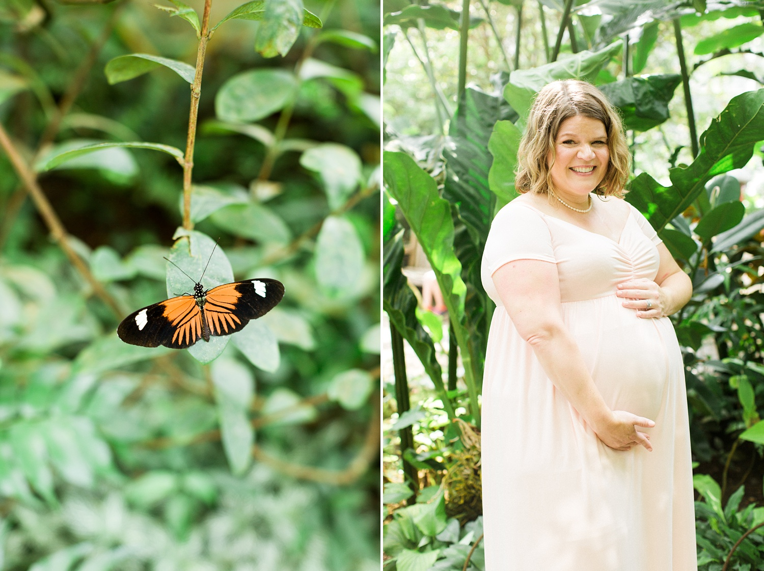 diptych of a butterfly on a leaf and a pregnant woman in a pink dress