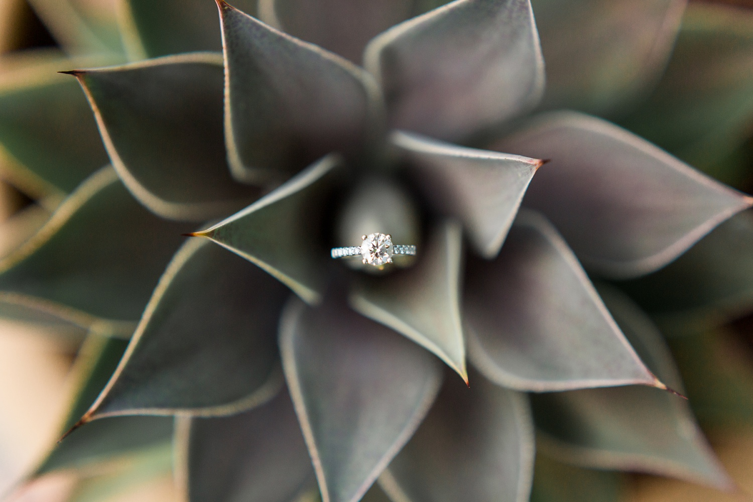 engagement ring nested in the spines of a succulent plant