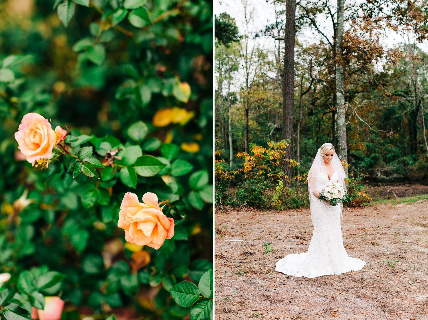 bridal portrait at cape fear vineyard by rachael bowman photography