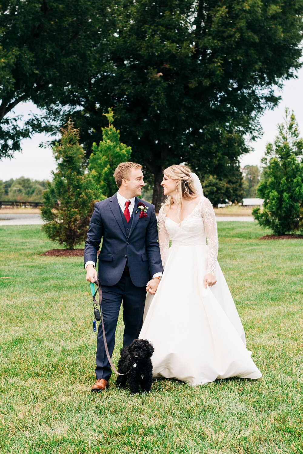 bride and groom walk with their labradoodle puppy