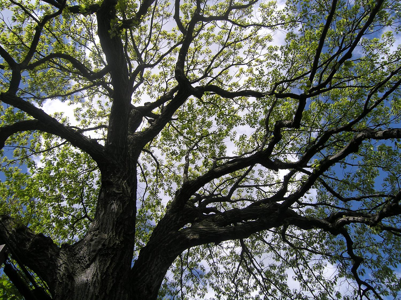 treeSpring.jpg
