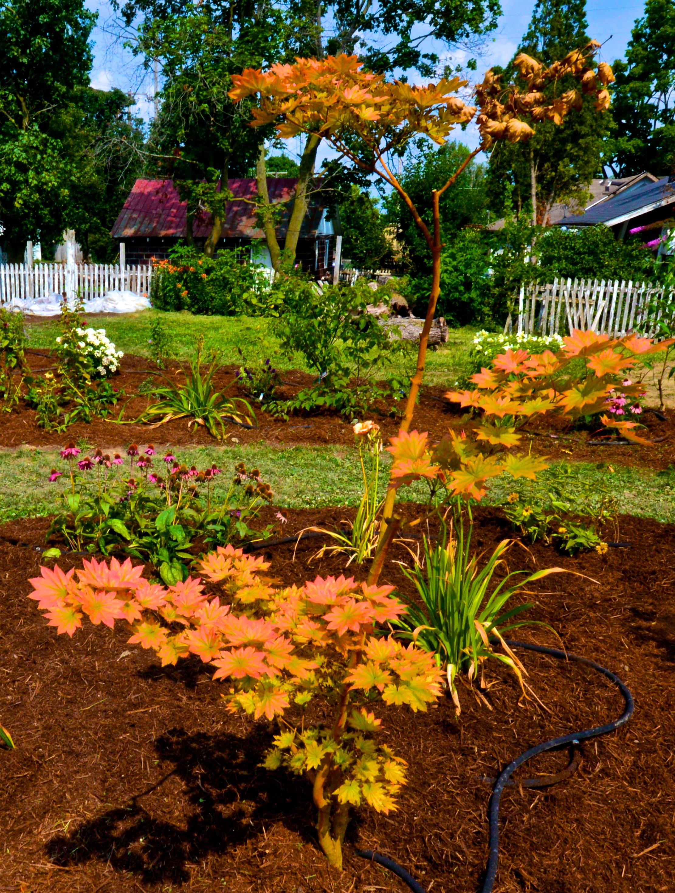 2014-08-02  Gardens 8 2 2014 (3).jpg