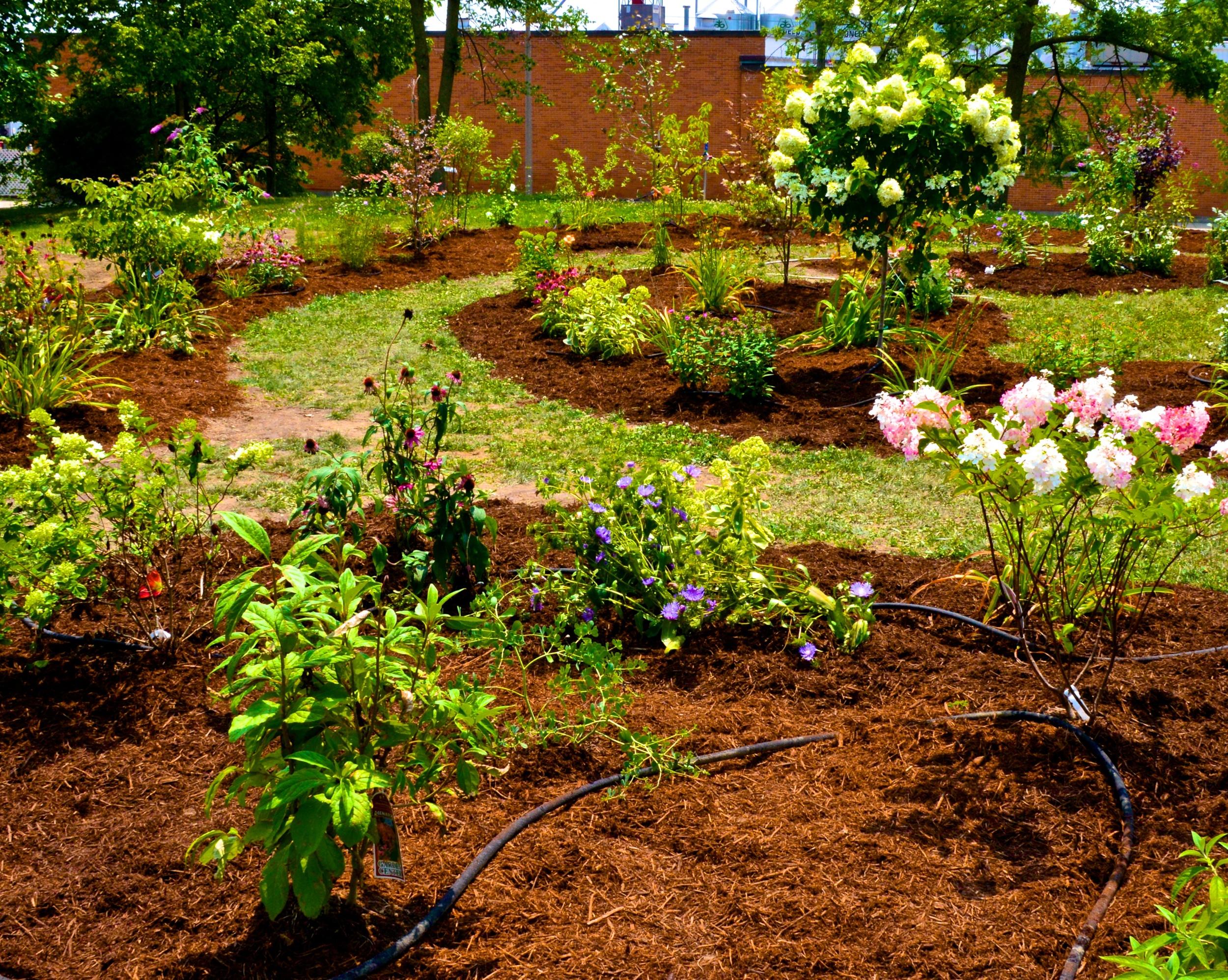 2014-08-02  Gardens 8 2 2014 (24).jpg