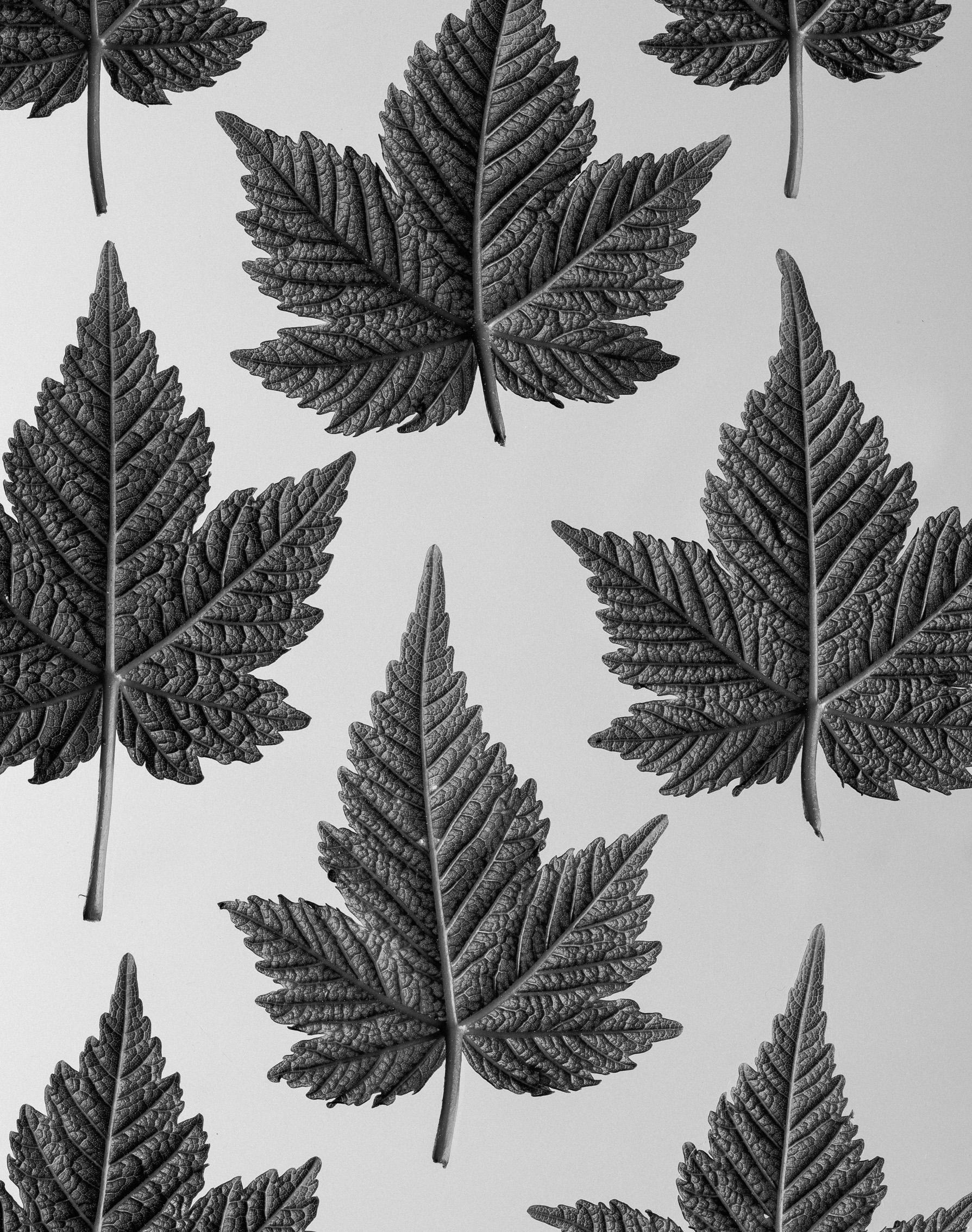 texturas-oleiros--47.jpg
