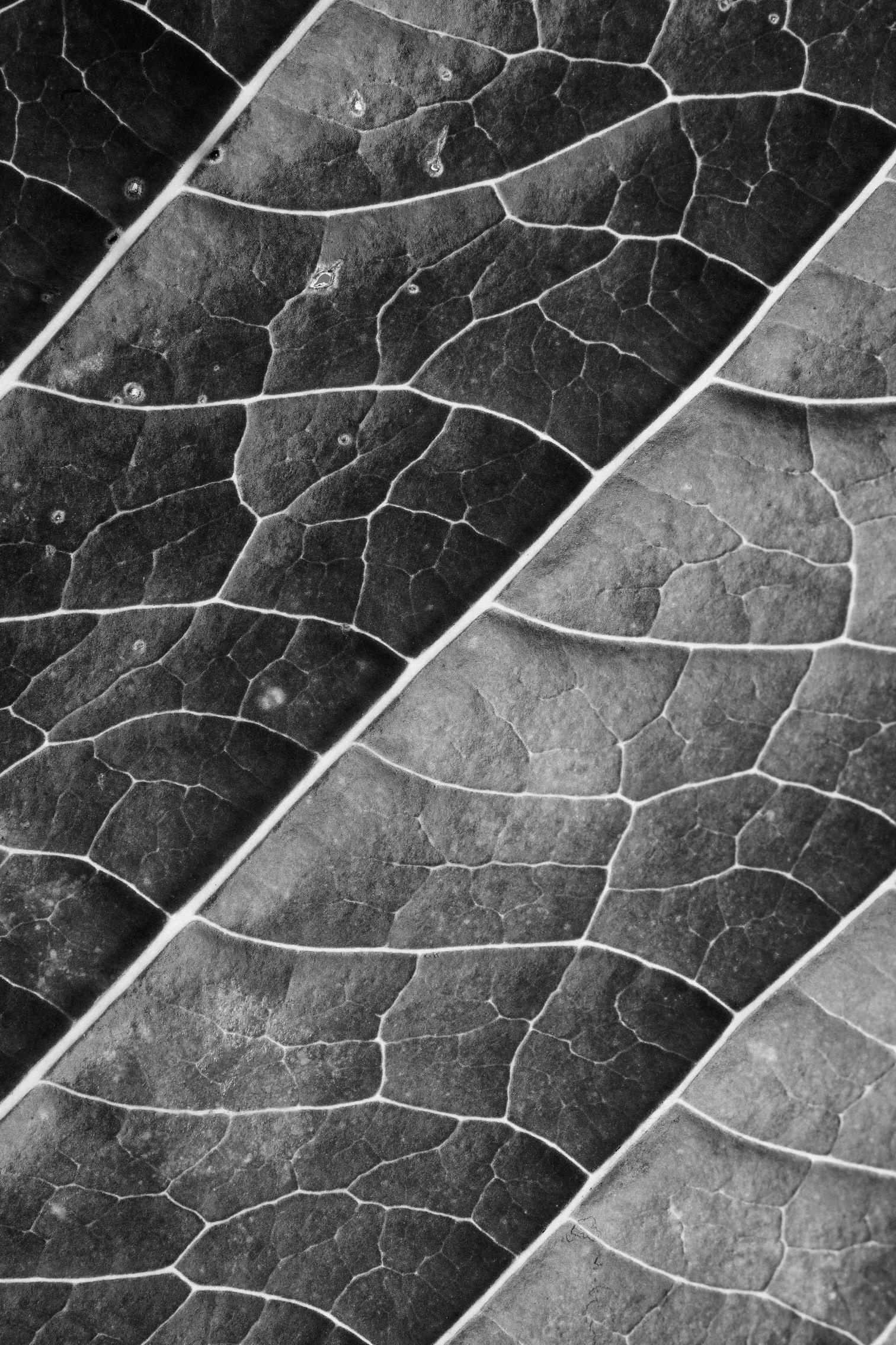 texturas-oleiros-6.jpg