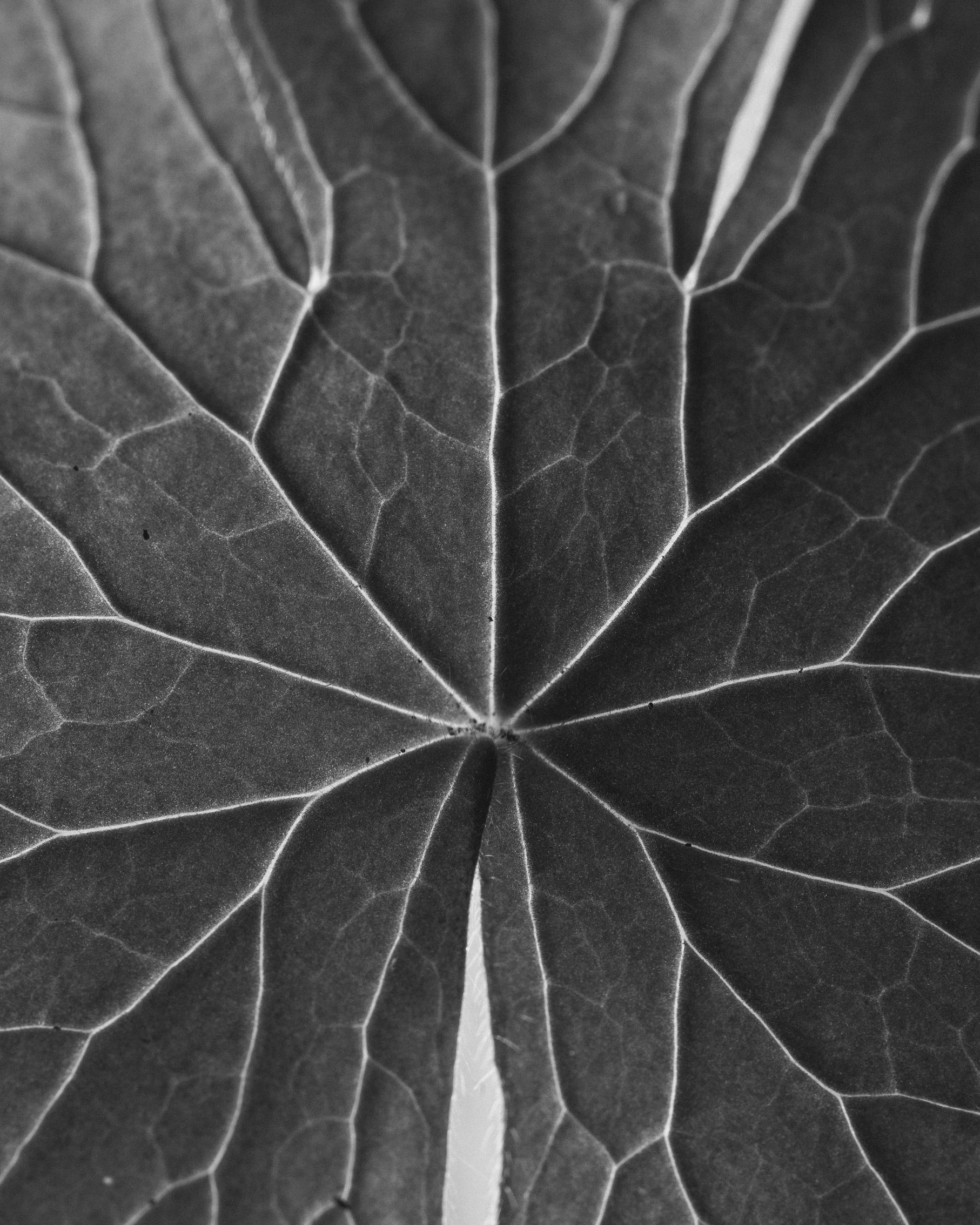texturas-oleiros-8.jpg