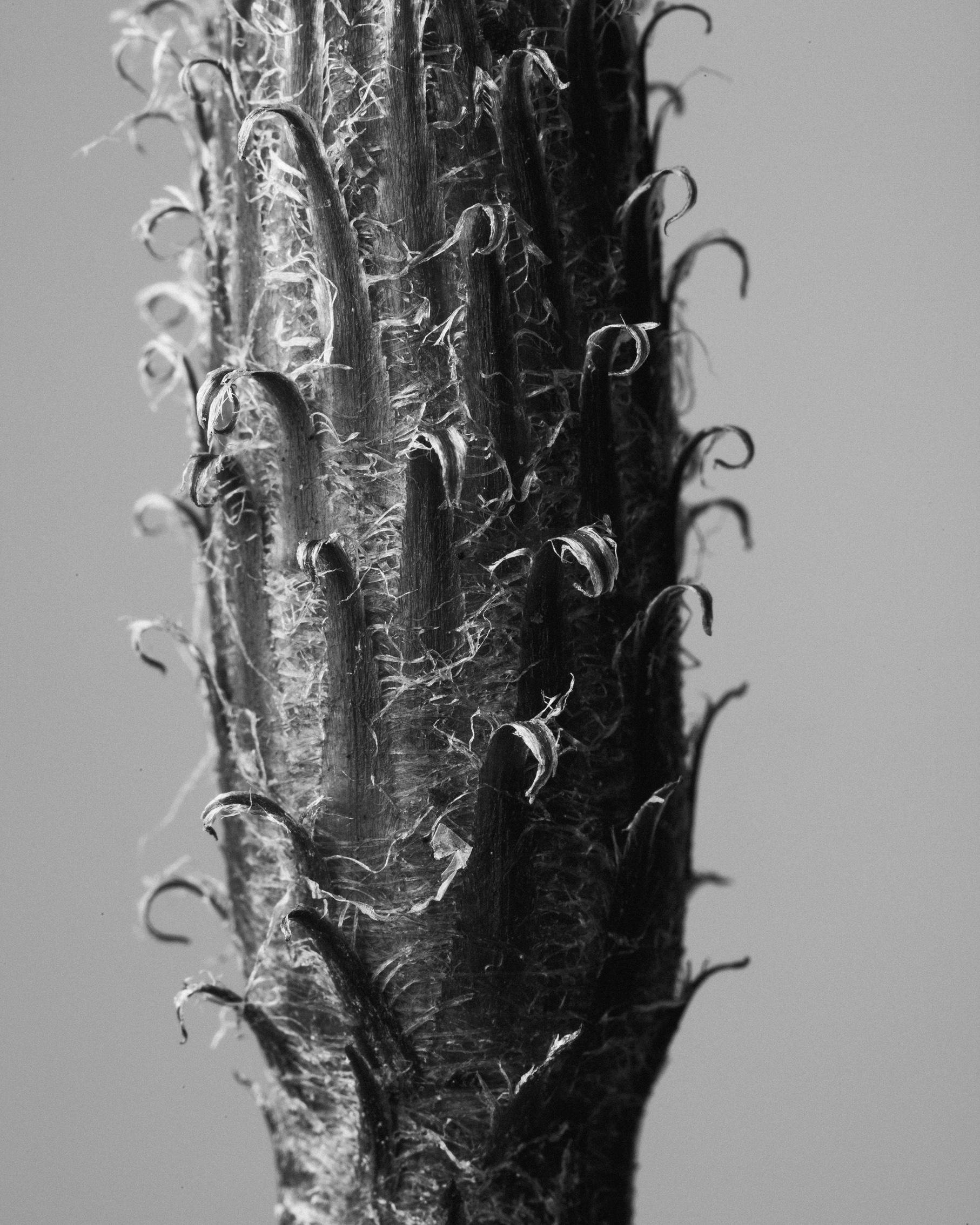 texturas-oleiros-16.jpg