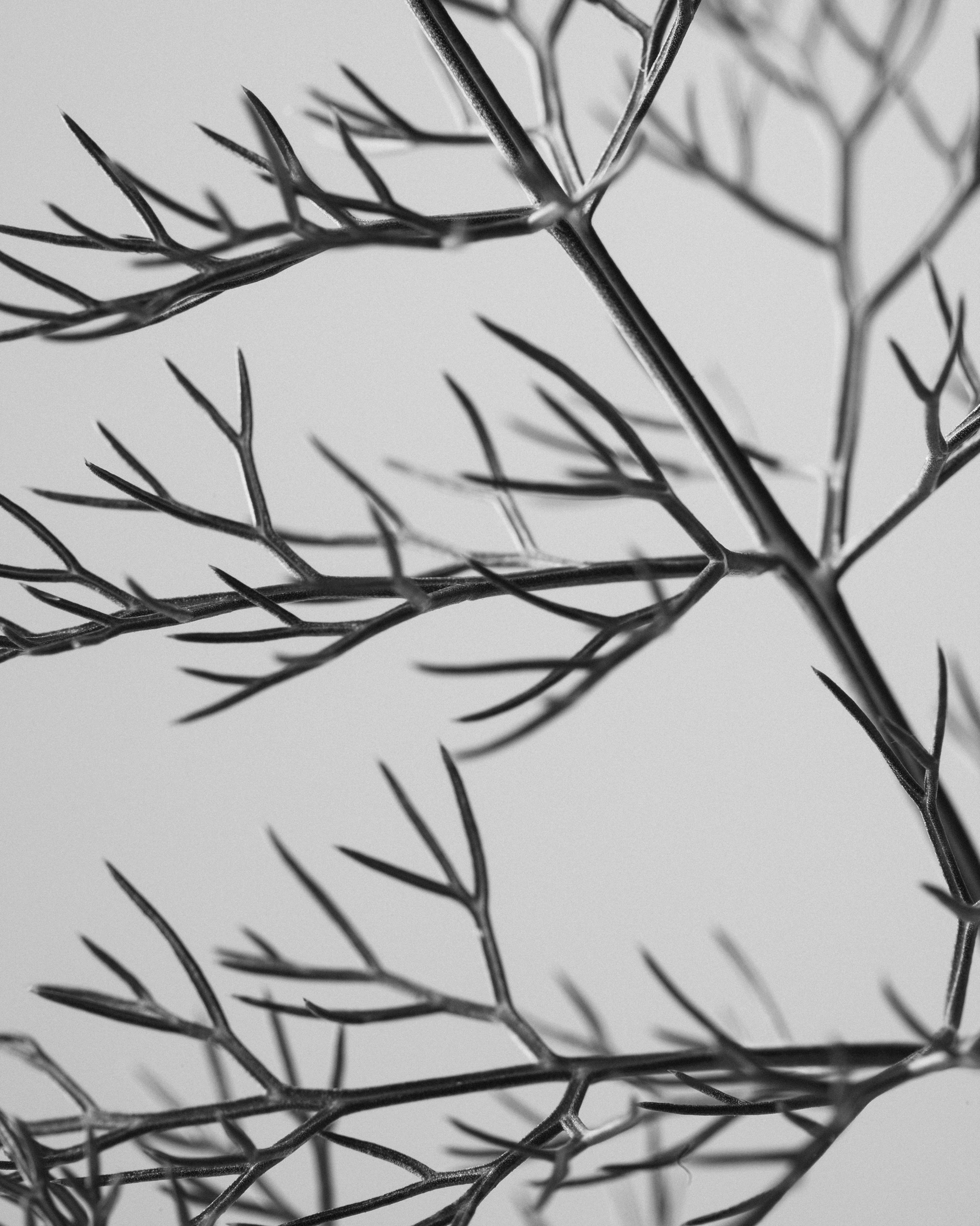 texturas-oleiros-26.jpg