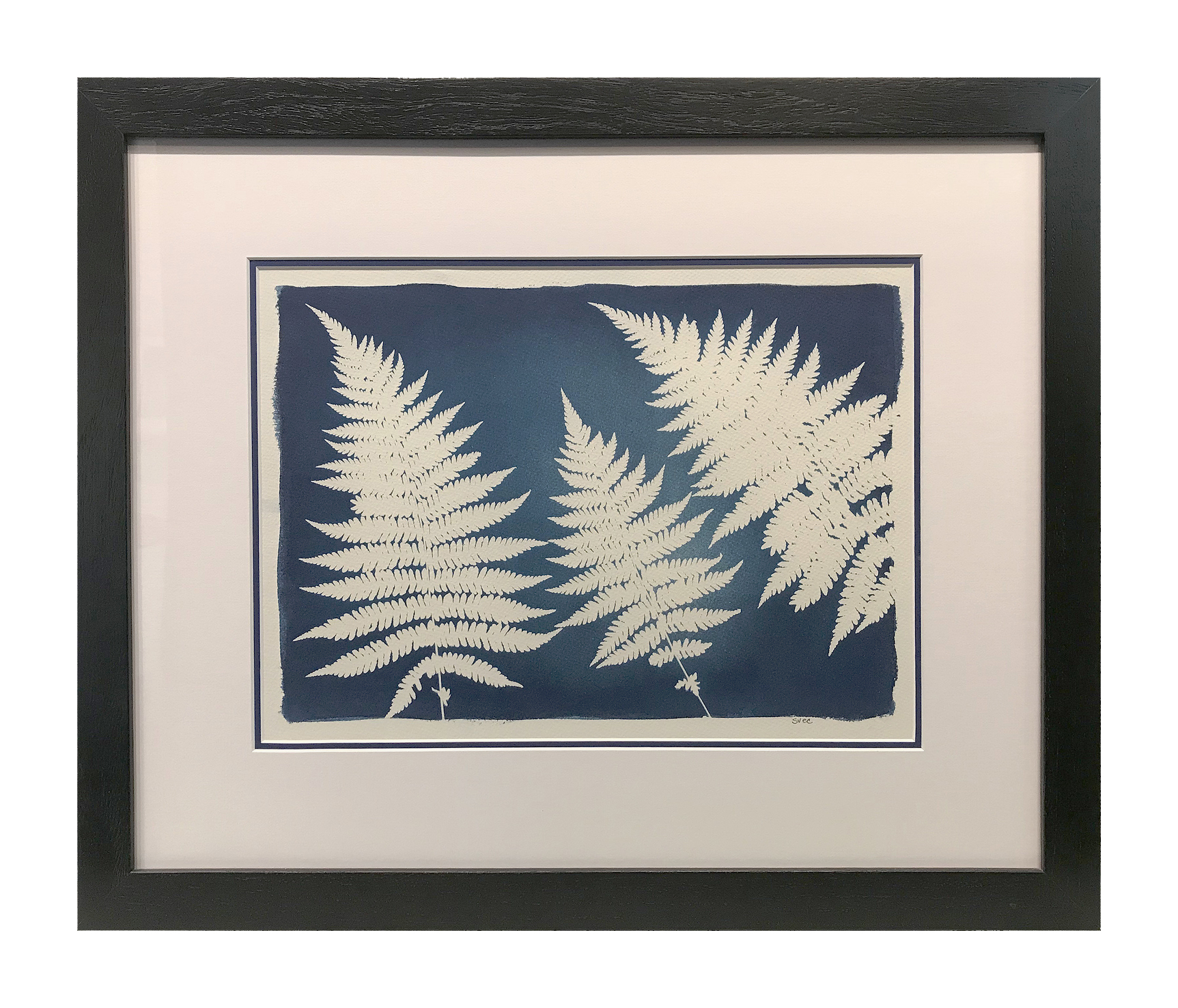 This cyanotype print is framed in a simple black wooden frame with a double mat.  The inner blue mat matches the blue of the print.