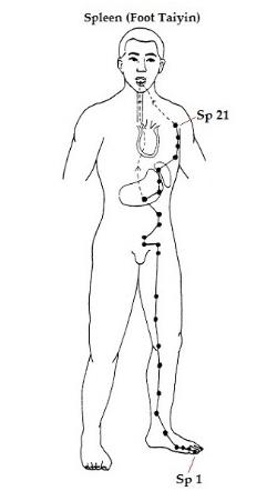 Spleen+meridian.jpeg