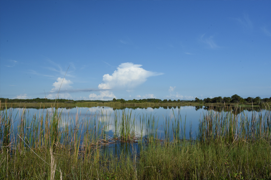 Florida everglades water and landscape