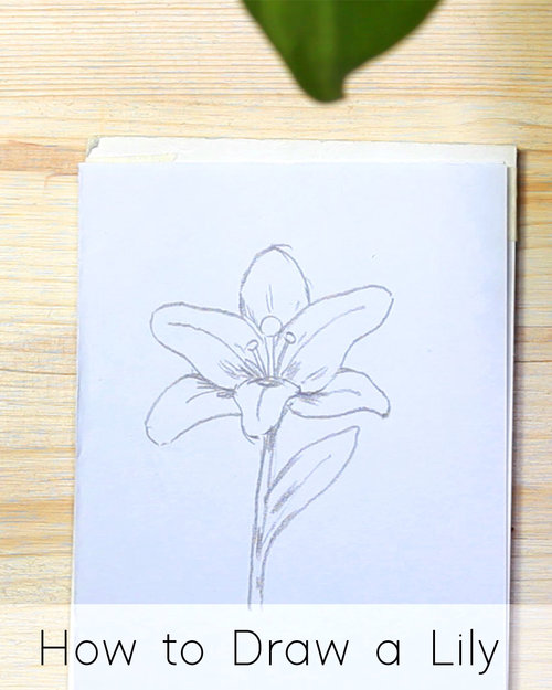 How To Draw Flowers Step By Step Tutorials For Beginners Jeyram Art