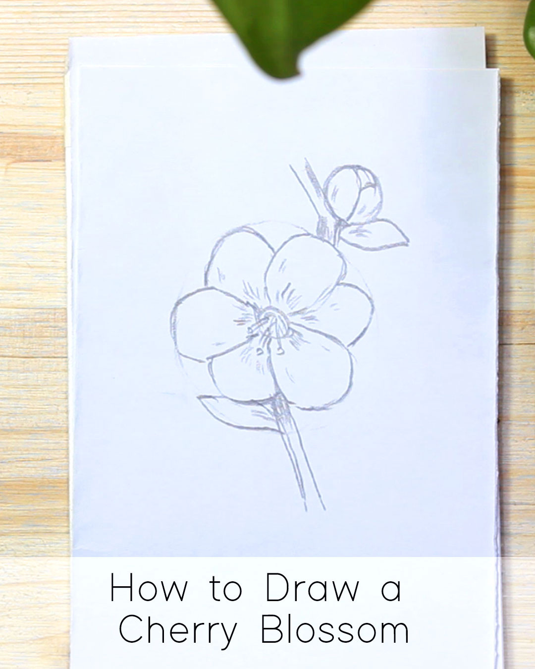 How to Draw a Cherry Blossom