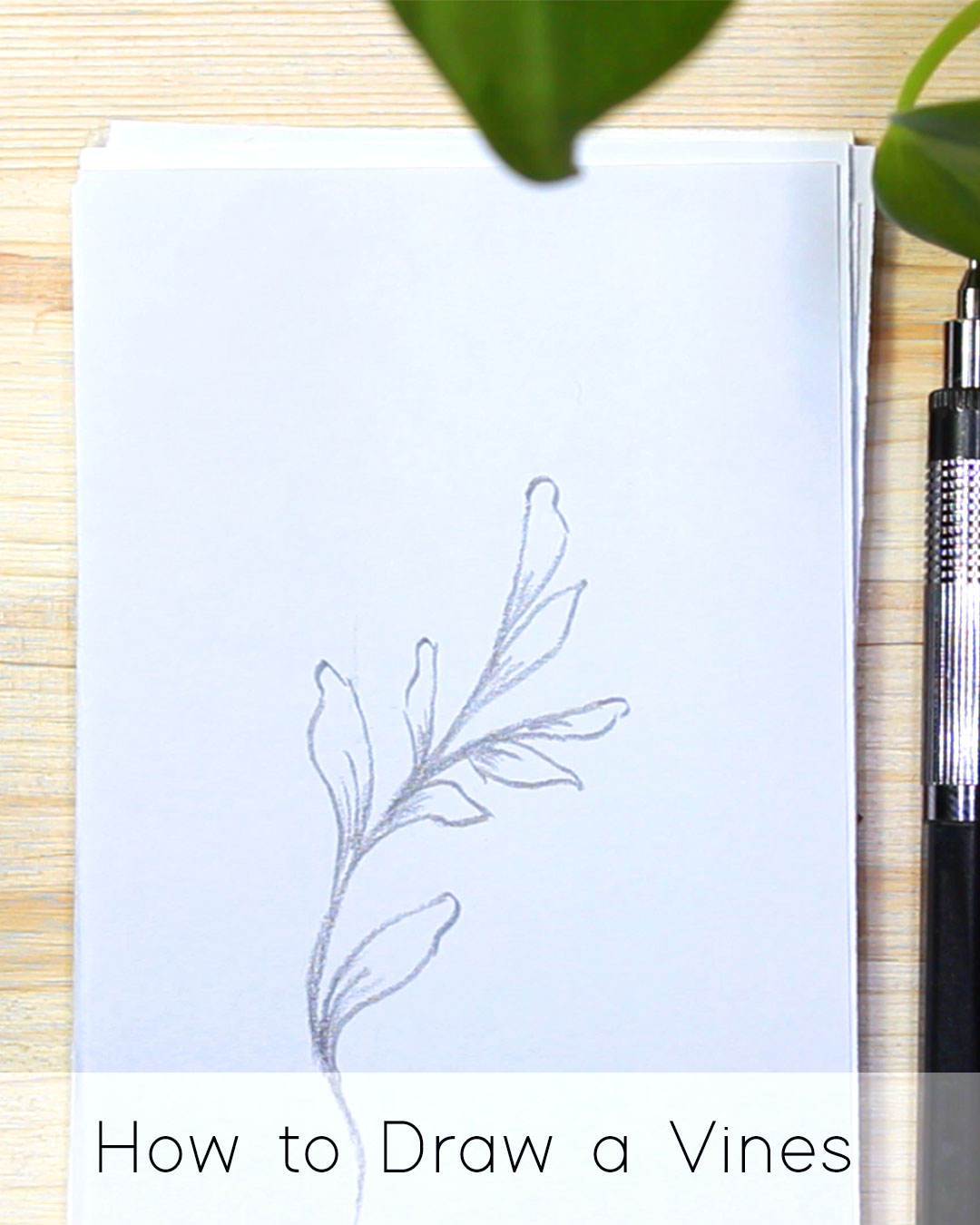How to Draw Leaf Vines