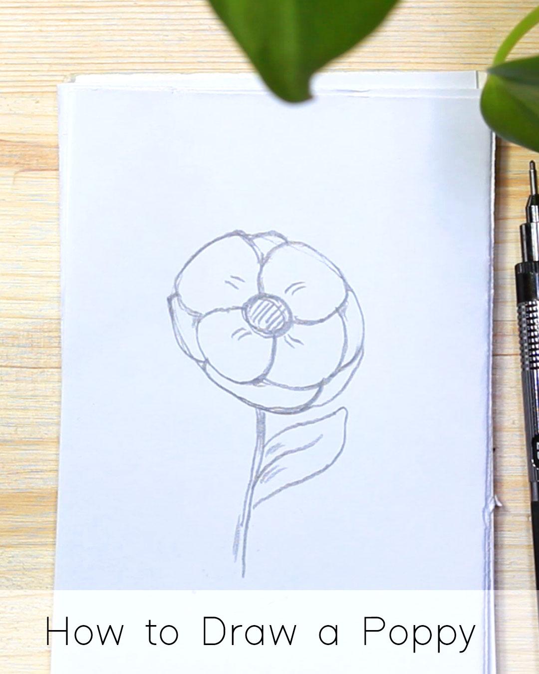 How to Draw a Poppy