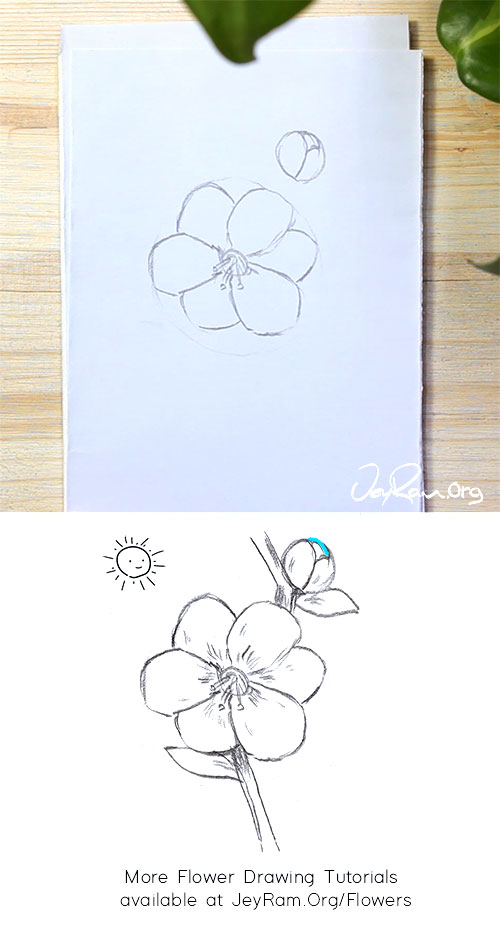 How to Draw a Sakura Cherry Blossom Flower on a Branch Step by Step by JeyRam #CherryBlossom #Sakura #flower #drawing