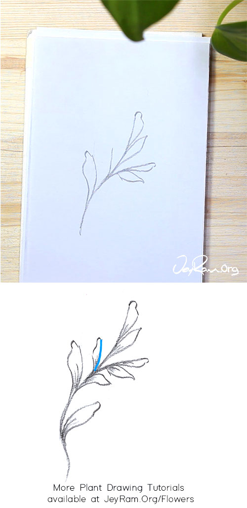 How to Draw a Leaf Vines Step by Step by JeyRam #leaf #vines #plant #drawing