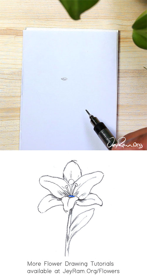How to Draw a Lily Flower Step by Step by JeyRam #lily #lilies #flower #drawing #tutorial