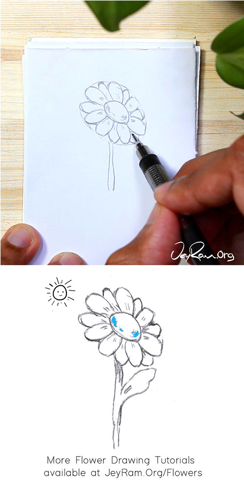 How to Draw a Daisy Flower Step by Step by JeyRam #Daisy #Daisies #Flower #Drawing #tutorial
