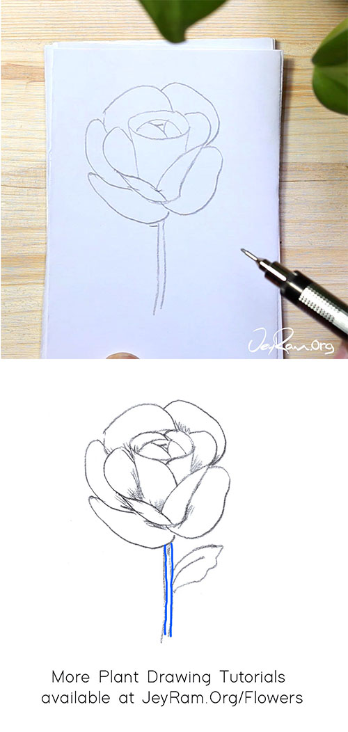 How to Draw a Rose Flower Step by Step by JeyRam #rose #roses #tutorial #flower #drawing