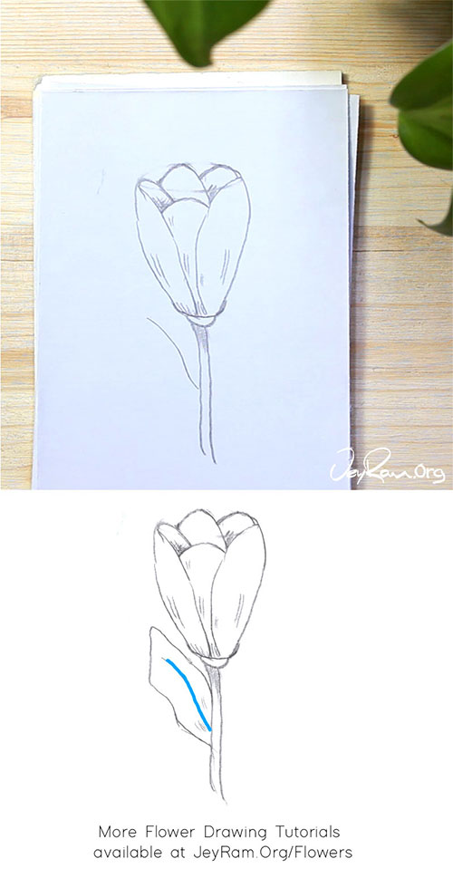 How to Draw a Tulip Flower Step by Step by JeyRam #Tulip #Tulips #flower #drawing #tutorial