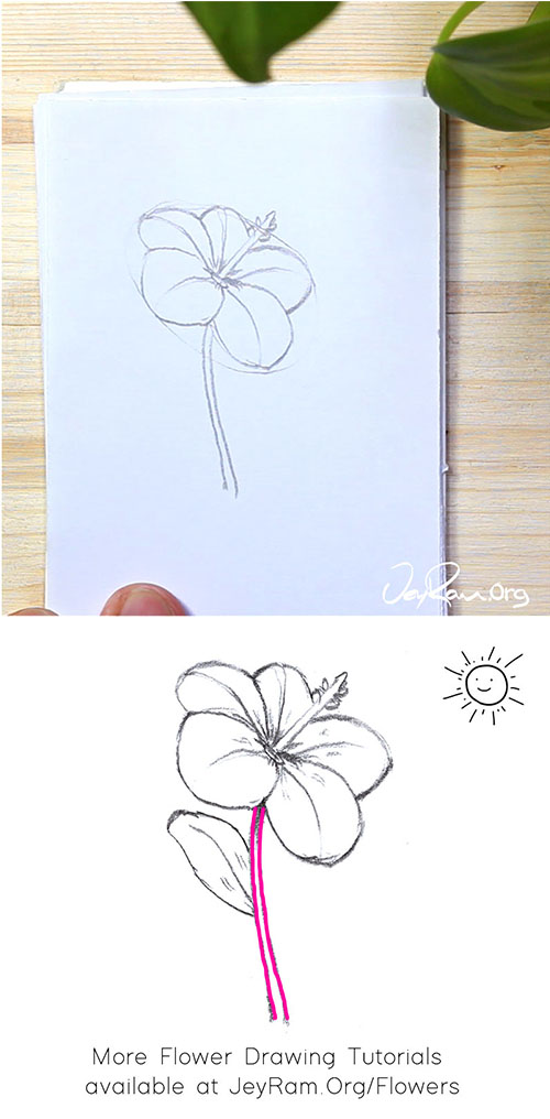 How to Draw a Hibiscus Flower Step by Step by JeyRam #Hibiscus #flower #drawing #tutorial