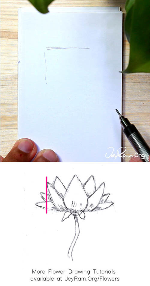 How to Draw an Lotus Flower Step by Step for Beginners by JeyRam #Lotus #flower #drawing #tutorial