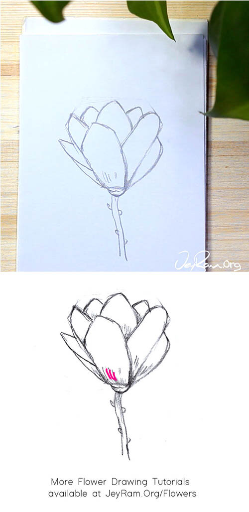 How to Draw an Magnolia Flower Step by Step for Beginners by JeyRam #Magnolia #flower #drawing #tutorial