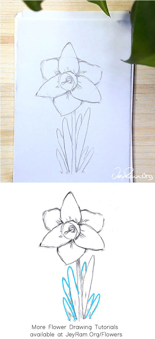 How to Draw an Daffodil Flower Step by Step for Beginners by JeyRam #Daffodil #flower #drawing #tutorial