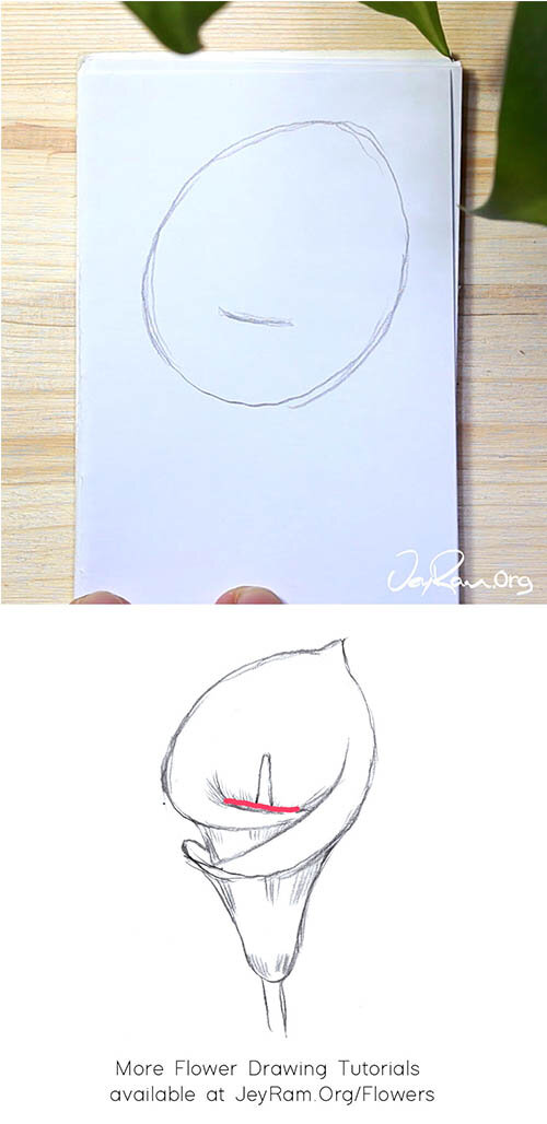 How to Draw an Calla Lily Step by Step for Beginners by JeyRam #Lily #CallaLily #flower #drawing #tutorial